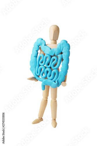 Fotografia Healthy intestines in hands of human figure