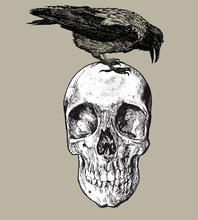 Raven On The Skull, Hand Drawing. Vector Illustration.