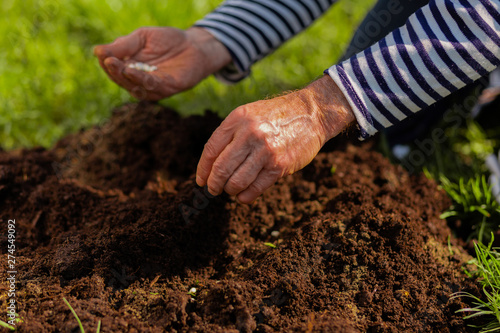 Close up of male hands enriching soil near just planted tree Wallpaper Mural