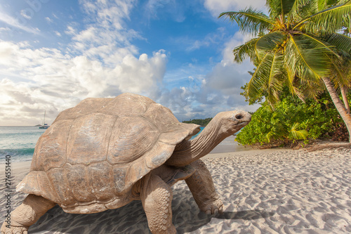 Fotografering turtle on the beach, anse Lazio, Praslin, Seychelles
