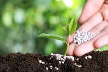 Woman Fertilizing Plant In Soi...