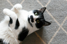 Cute Cat Lazy Lying On Stylish Rug In The Kitchen, Top View. Sweet Black And White Kitty With Mustache Resting, With Interesting Look And Funny Emotions. Space For Text