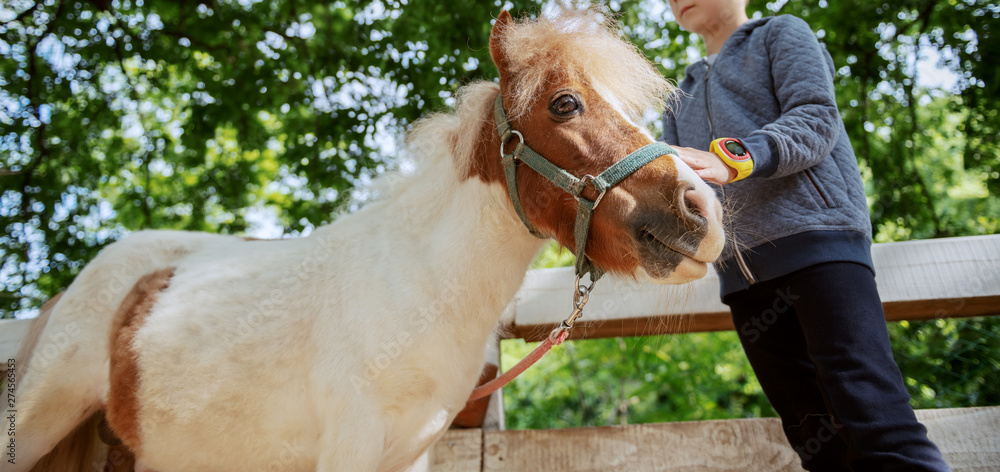 Fototapety, obrazy: Caucasian boy grooming adorable white and brown pony horse. Sunny day on ranch concept.