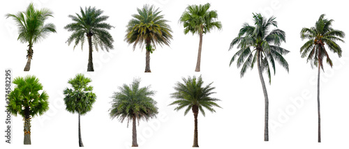 Fotografia Set beautiful coconut and palm trees isolated on white background, Suitable for use in architectural design and decoration work