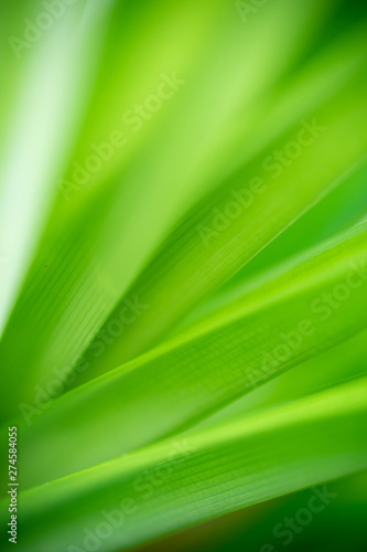 Green leaf nature i for wallpaper and background, Yellow color with copy space using as background natural green plants landscape #274584055
