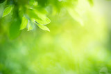 Fototapeta  - Closeup nature view of green leaf on blurred greenery background in garden with copy space for text using as summer background natural green plants landscape, ecology, fresh wallpaper concept.