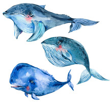 Watercolor Blue Whale Watercolor Illustration, Nautical Greeting Card