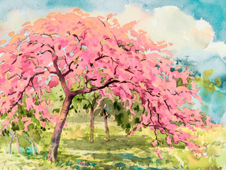 FototapetaWatercolor landscape of cherry blossom and meadow.