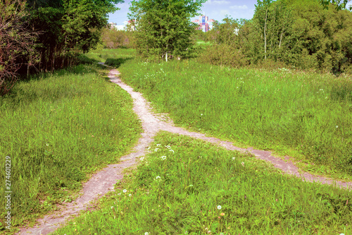 In a park near the city, two footpaths are merged into one Canvas Print