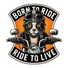 Cat Driving A Motorcycle Rides...