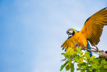 Parrots In The Sky