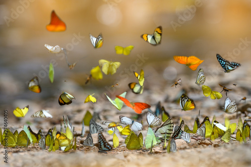 Fotografie, Obraz  The beauty of many butterflies in nature
