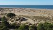 Trees sand dunes vegetation mediterranean sea aerial drone shot sunny morning France Espiguette
