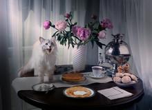Russian Siberian Cat Climbed O...
