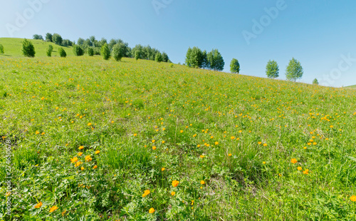 Photo Green grassy meadow on a slope of the hill with beautiful bright orange flowers