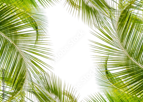 Poster Palmier palm leaves on white background