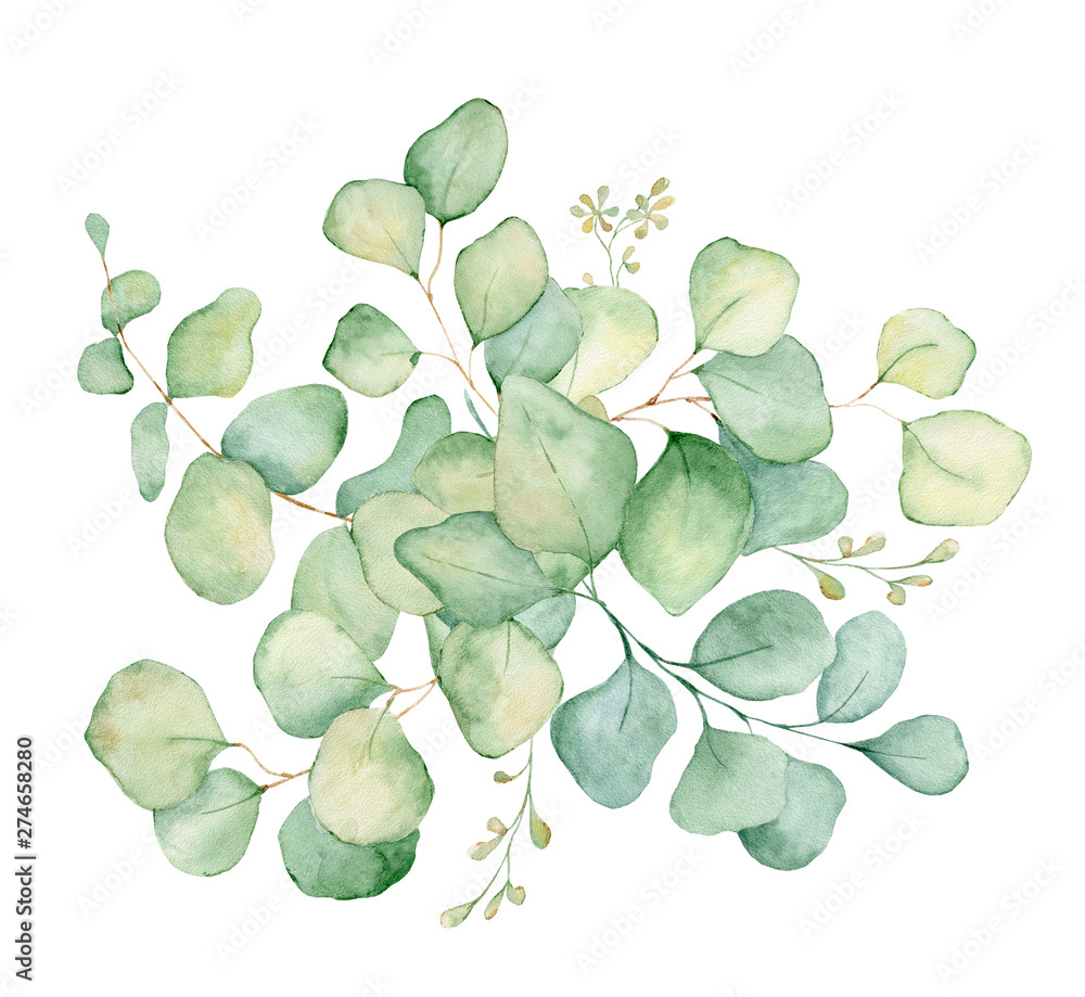 Fototapety, obrazy: Green eucalyptus leaves watercolor bouquet illustration