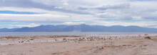 Desert View At Salton Sea Recreation Area, Panorama
