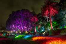 Botanic Garden Illuminated With Artificial Lights