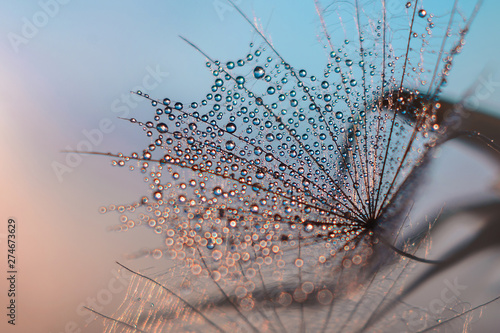 water droplets on a feather resembling a cobweb in the evening light on a gentle bare background