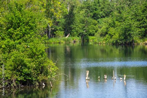 Fotografia, Obraz marais du parc d'isle à Saint-quentin