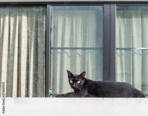 Fotografie, Tablou Black cat wall fence window house faithful world