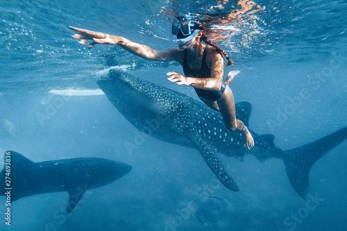 Cuadros en Lienzo Woman snorkeling with whale sharks in deep blue ocean
