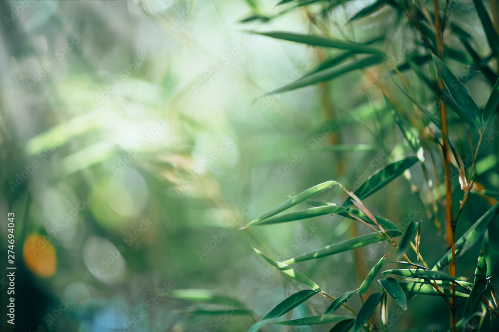 Fototapety, obrazy: Bamboo forest. Growing bamboo border design over blurred sunny background. Nature backdrop