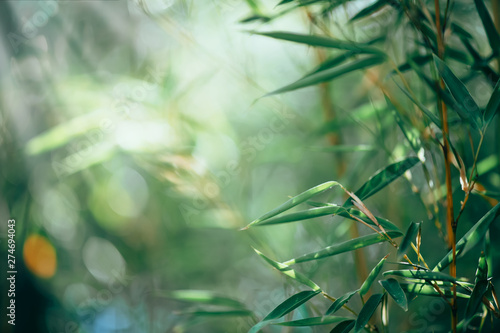 Bamboo forest. Growing bamboo border design over blurred sunny background. Nature backdrop