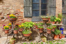 Flower Arrangement At The Backyard