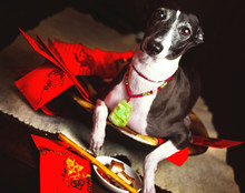 Italian Greyhound Dog Celebrat...
