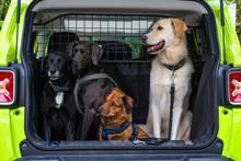 Vier Hunde Im Auto