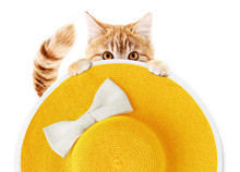 Ginger Funny Cat With Summer Beach Round Straw Yellow Hat With White Bow Isolated On White Background