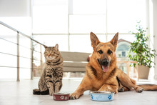 Cat And Dog Together With Feed...
