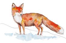 Fox In The Snow Watercolor Pen