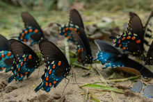 Focus On One Butterfly In Group