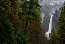 Forest With Lower Yosemite Fal...