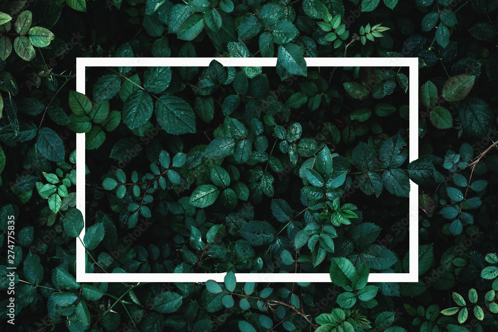 Fototapety, obrazy: Green leaves or plants background with white frame for text as mockup for card