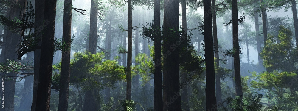 Fototapeta Trees in the fog. The smoke in the forest in the morning. A misty morning among the trees. 3D rendering