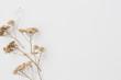 Leinwandbild Motiv Dry floral branch on white background. Flat lay, top view minimal neutral flower composition.