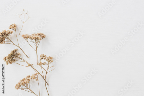 Printed kitchen splashbacks Floral Dry floral branch on white background. Flat lay, top view minimal neutral flower composition.