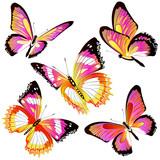 butterfly107