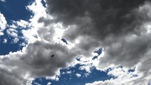 Black Bird Flying Under Some White Clouds On A Nice Day.