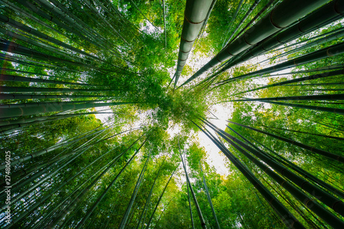 Spoed Fotobehang Bamboo Bamboo forest at the traditional guarden. Kamakura district Kanagawa Japan - 04.28.2019 camera : Canon EOS 5D mark4