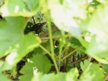 A Scythe Head Sitting On A Nes...