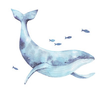 Blue Whale Watercolor Illustration Isolated On White. Big Wild Underwater Animal Beautiful Blue Violet White Watercolor Whale Ballena Painting. Mammal Marine Or Oceanic Water Animal Swimming.