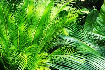 Panel Szklany Podświetlane Liście green fern plant texture