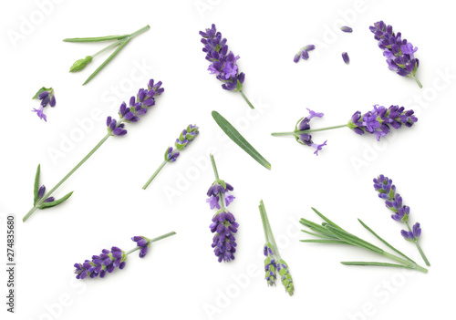 Photo sur Toile Lavande Lavender Flowers Isolated On White Background