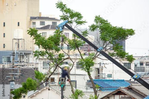 Obraz na plátně 台風による倒木被害を予防する為の伐採