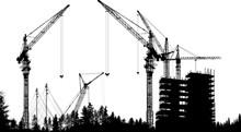 Large Black Cranes Above Forest